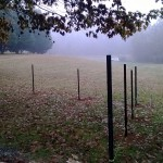 Fence posts divide area